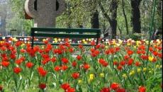 Flori oraşe