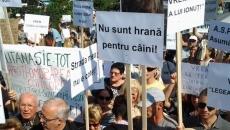 Protest caini maidanezi