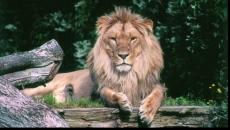 zoo ramnicu valcea
