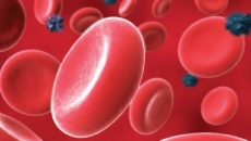 globule rosii