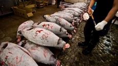 fukushima.pacific