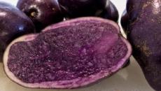 cartof violet