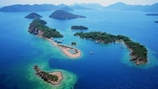 insule