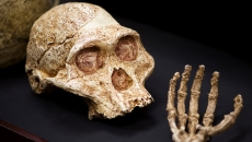 homo naledi reconsituire new york times