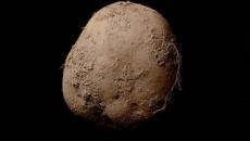 cartof