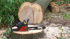 Noul Cod Silvic prevede ca furtul de arbori intră direct sub incidenţă penală