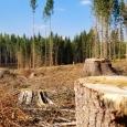 Terra a pierdut aproape 100 milioane de hectare de pădure în ultimii 20 de ani